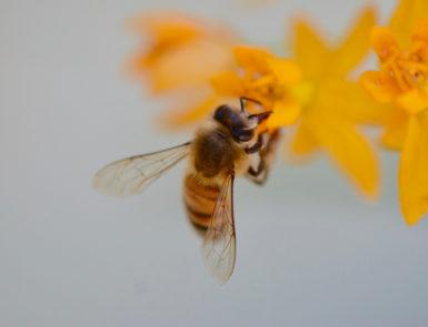pollinator-pleasing backyard